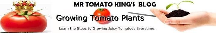 Mr Tomato King's Blog