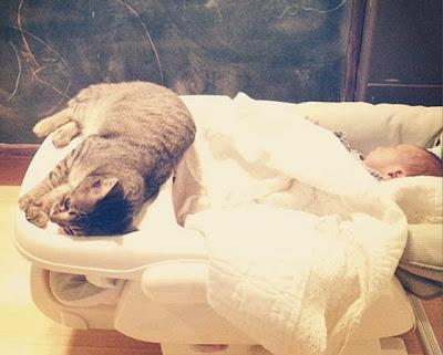 foto kucing bernama toco dan seorang bayi 02