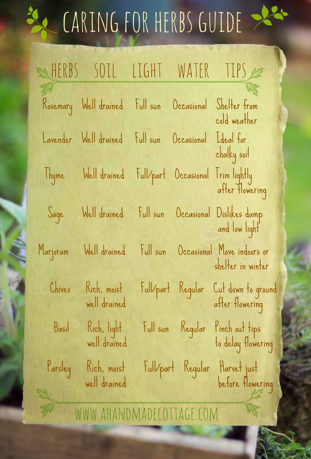 The AHC guide to growing herbs chart