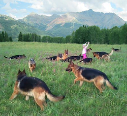 German Shepherd paradise