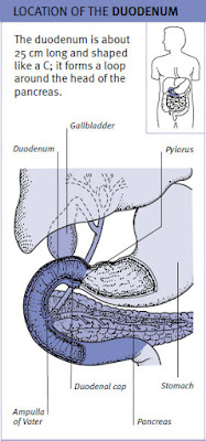 LOCATION OF THE DUODENUM