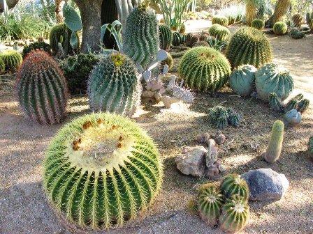 12 maravillosos jardines de cactus como sembrar el for Como plantar cactus