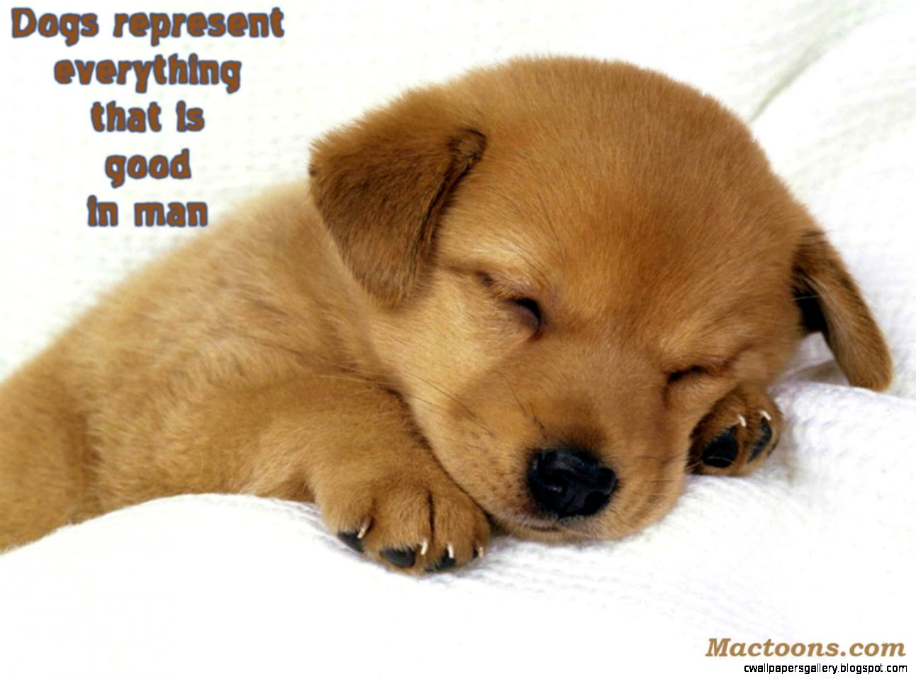 cute Dog Images With Quotes Wallpapers Gallery