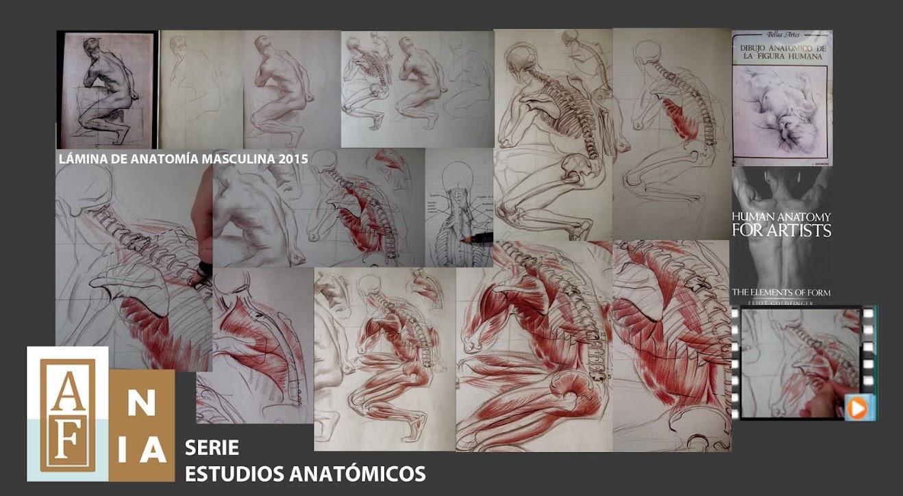 VIDEOCURSO  ESTUDIOS ANATÓMICOS