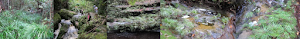 Bucephalandra blog
