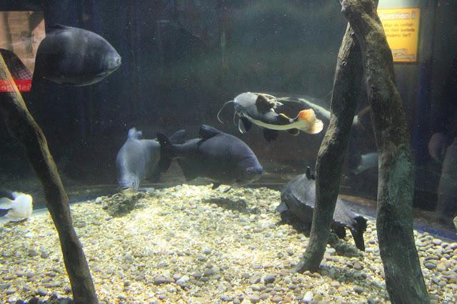 georgina-minter-brown-georgie-frequencies-holiday-bournemouth-birthday-trip-sea-coast-ocean-oceanarium-aquarium-fish