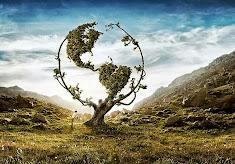 sufletul pereche - copacul cu vise