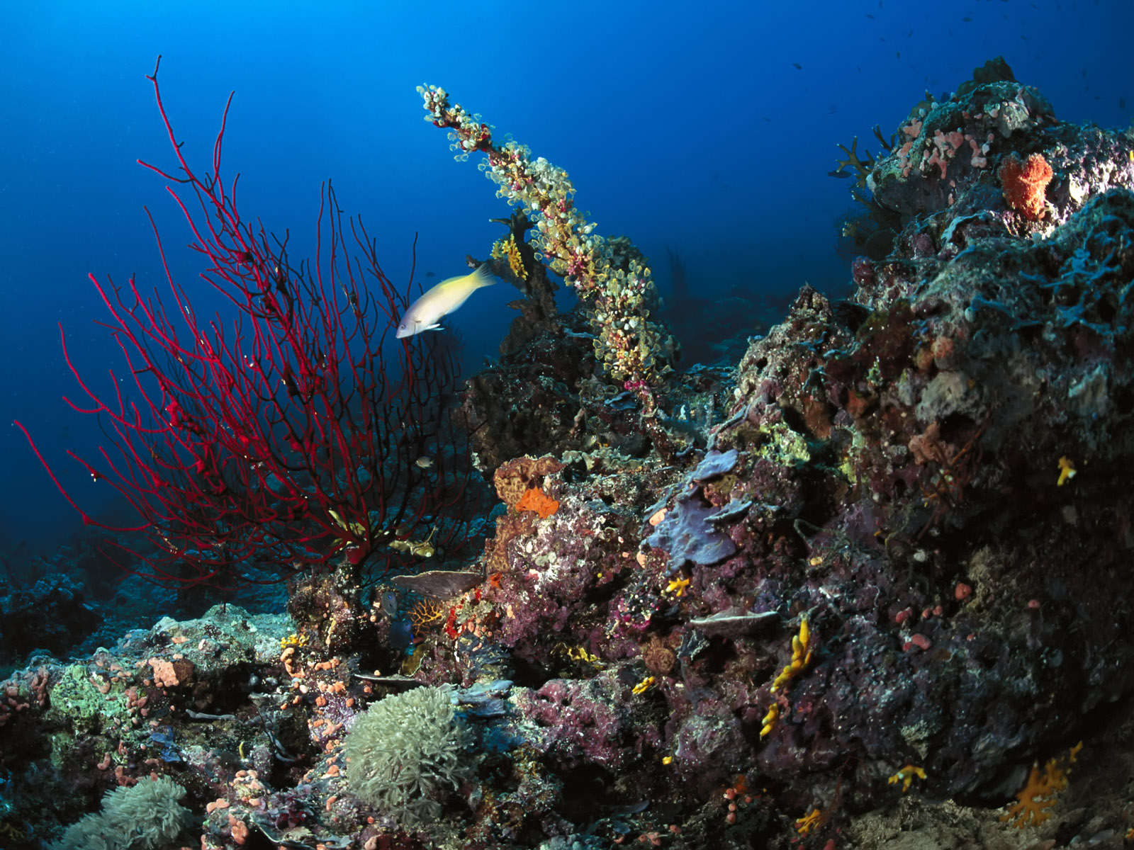 Underwater sea fishes hd wallpapers npicx we share