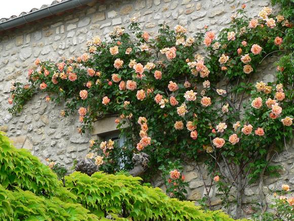 Arte y jardiner a rosas las reinas del color en el jard n - Plantas para setos altos ...