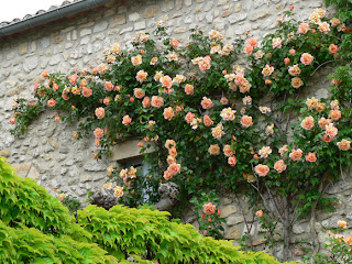 Arte y jardiner a rosas las reinas del color en el jard n for Jardineria rosales