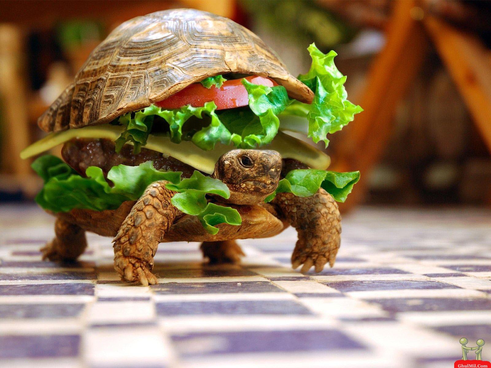 http://3.bp.blogspot.com/-MppC21AR3cs/Td1VR7cB6MI/AAAAAAAAAd8/S1sEYh9gLEk/s1600/fresh-live-turtle-burger-wallpaper.jpg