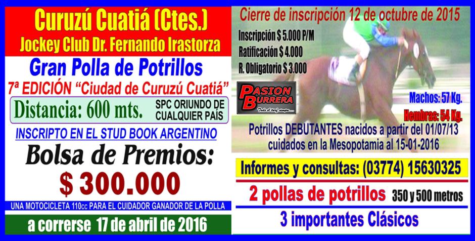 CURUZU CUATIA - POLLA PUROS