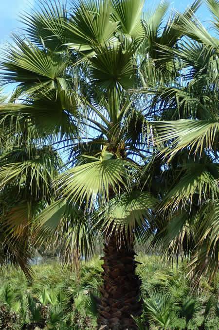 Flores e jardins plantas jardinagem e paisagismo cinco - Plantas exterior resistentes ...