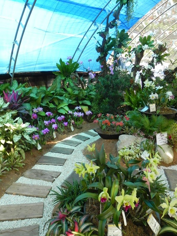 Our philippine trees and they said you can 39 t landscape for Philippine garden designs