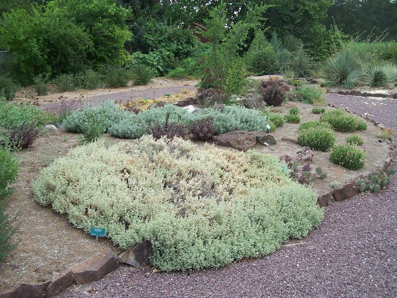 DesertZone: Back to Plantasia Cactus Gardens (Twin-Falls, ID)