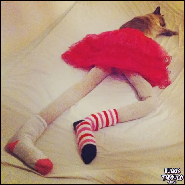 Fotos de Gatinhos com calças