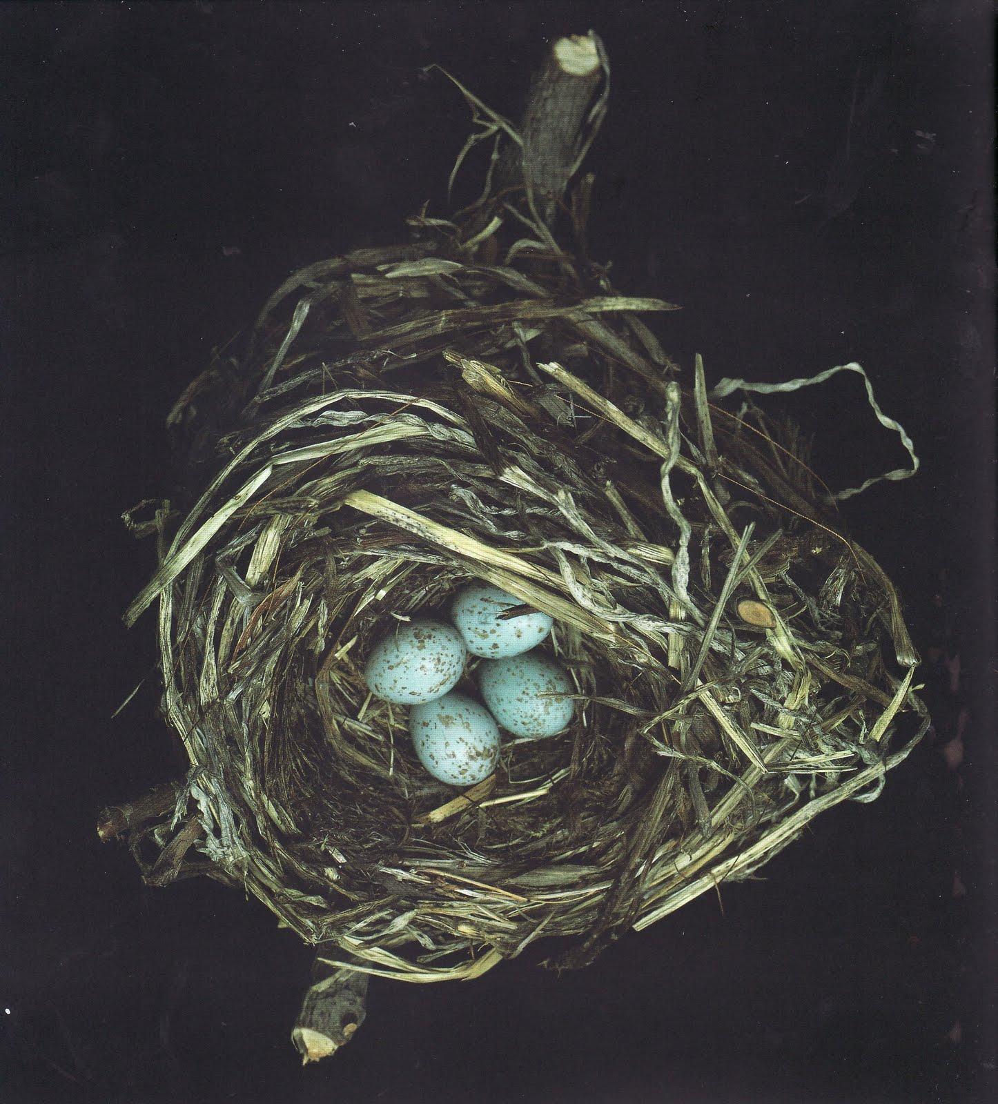 Photo nest of debauchery