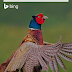 Gambar Hewan Unik Versi Bing in Nokia Lumia 920