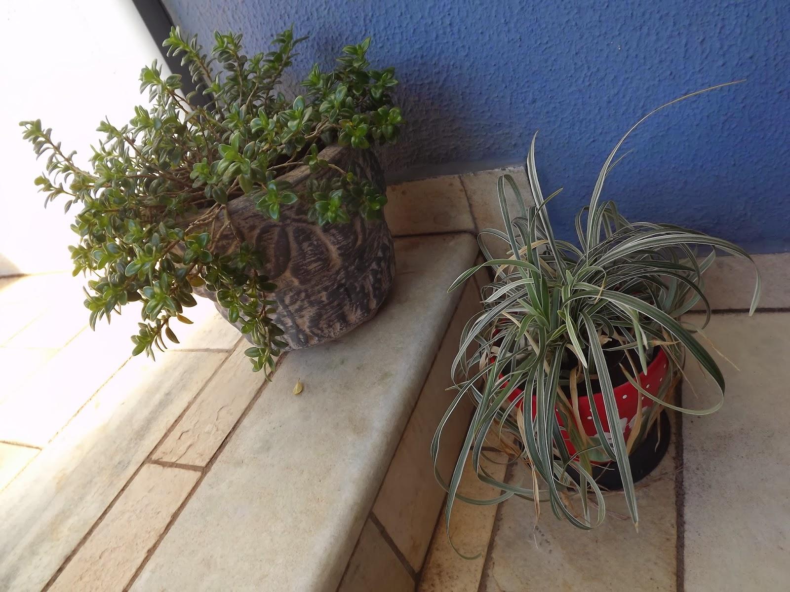 maristelagsalgado.blogspot.com.br
