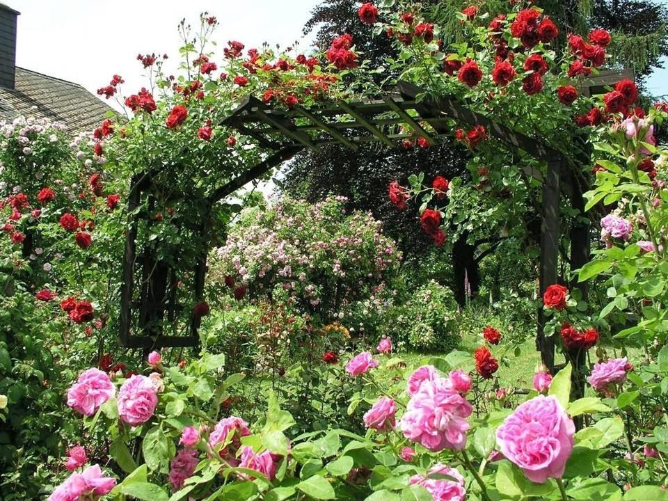 plantas m gicas jardineria los rosales ForJardineria Rosales