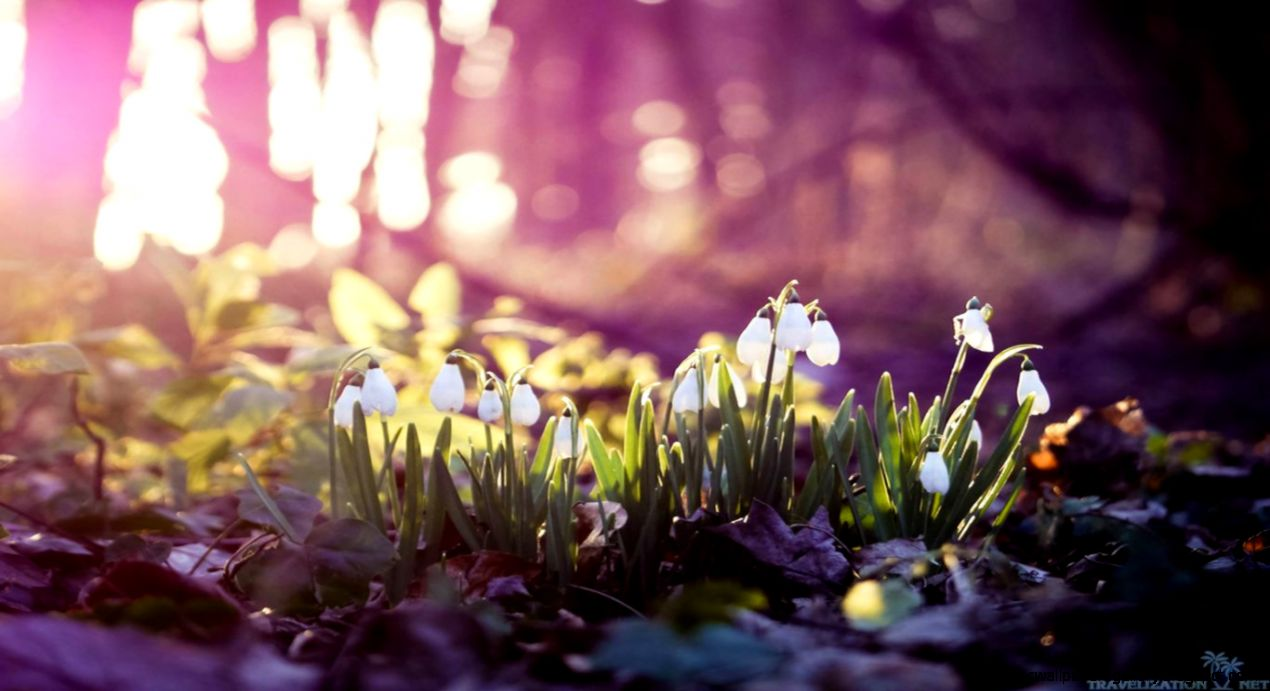 Early Spring Wallpapers   Wallpaper Cave