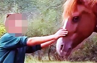 Kuda Mengamuk Gigit Penis Bocah Enam Tahun Hingga Putus