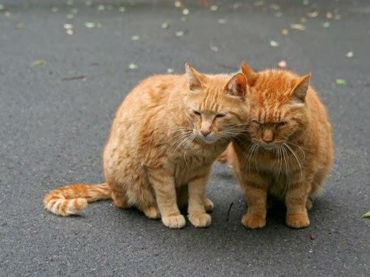 Бездомные животные/кошки