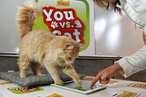 Приложения в Google Play – Game for Cats