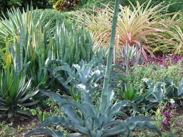 paisajismo pueblos y jardines plantas para jardines