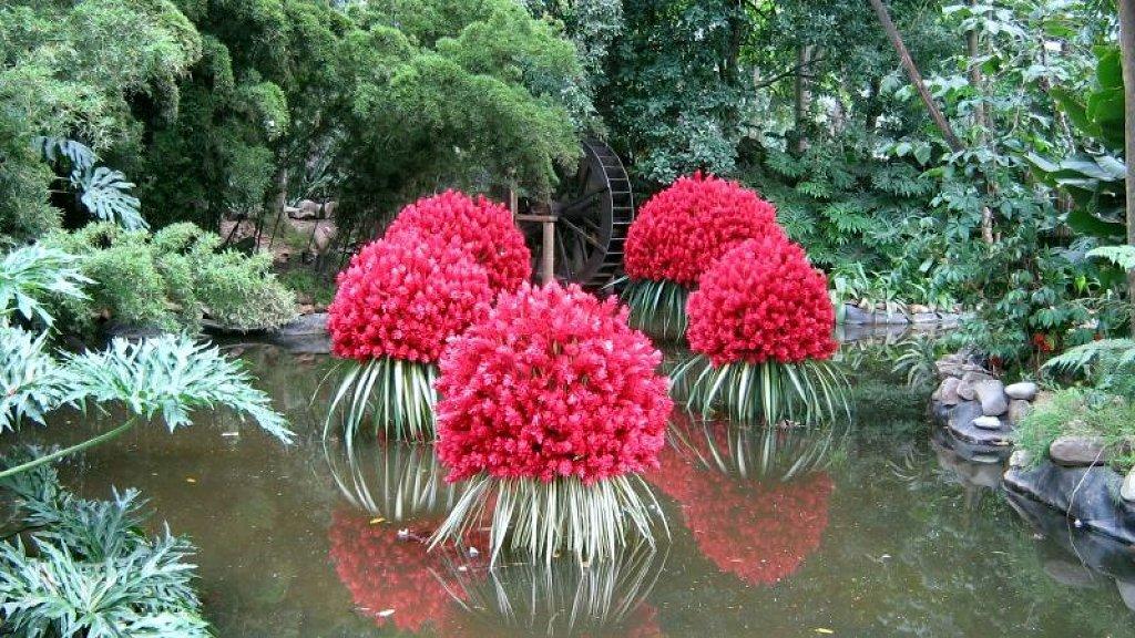 Arte y jardiner a plantas acu ticas en dise o de jardines for Matas de jardin