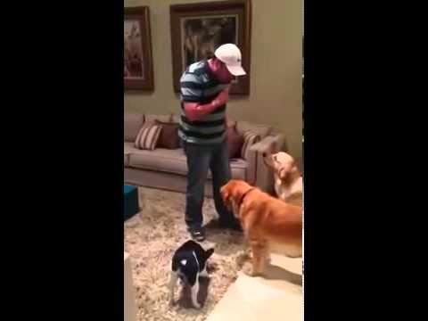 Francisco: o cão culpado
