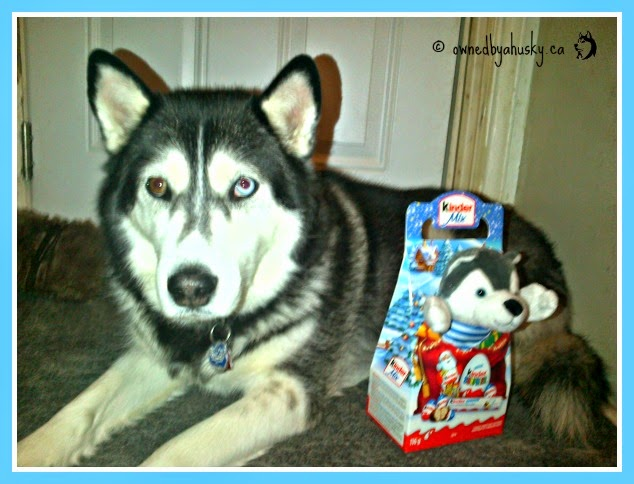 Holiday Kinder Egg Husky
