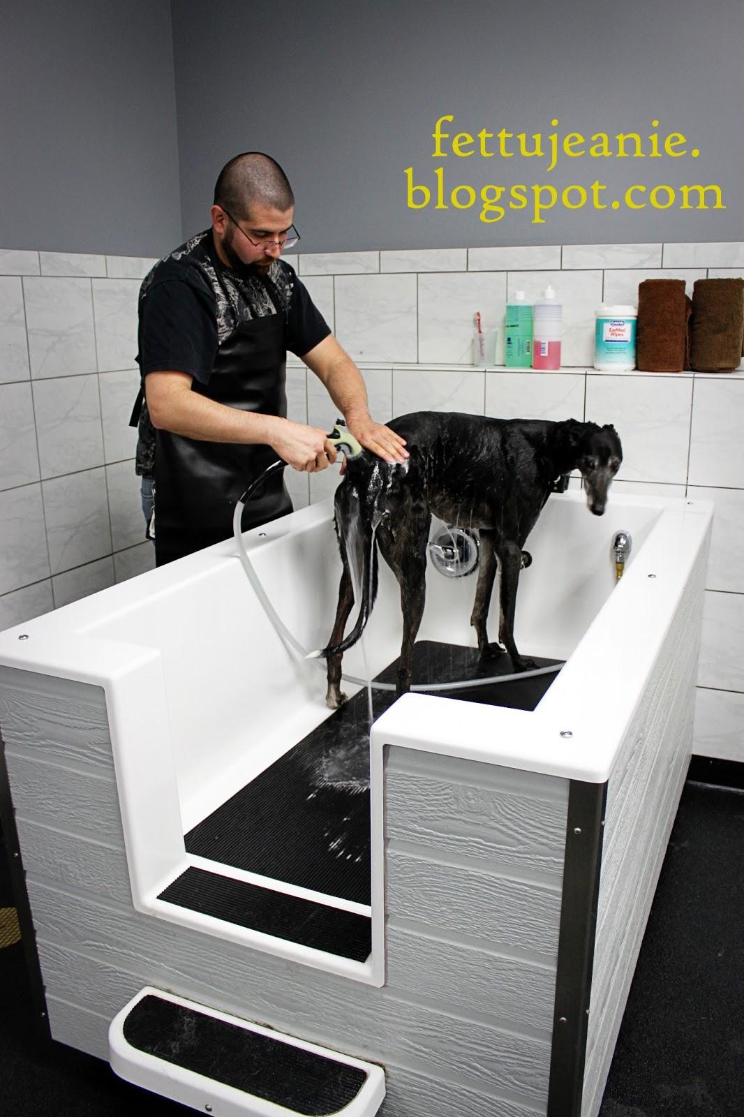 Fettujeanie dirty dogs self service dog wash review solutioingenieria Choice Image