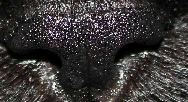Do Cats And Dogs Have Fingerprints