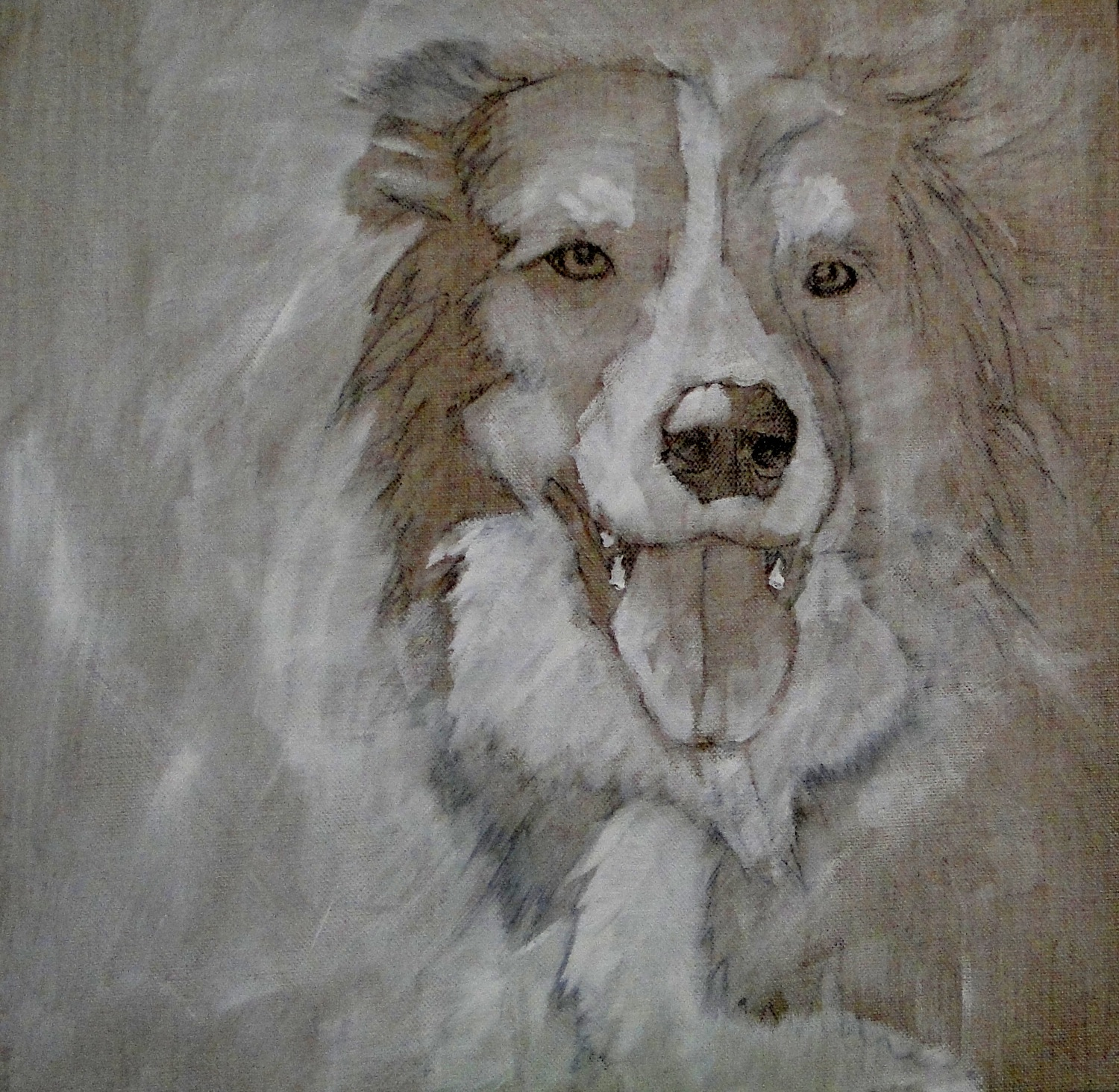 first stage of a border collie oil painting - sketch on canvas