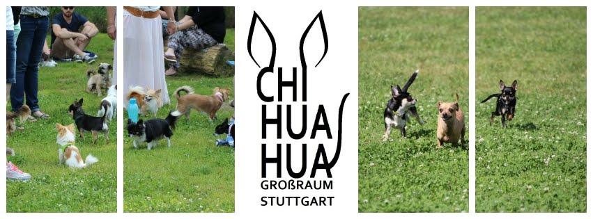 Chihuahuas Großraum Stuttgart