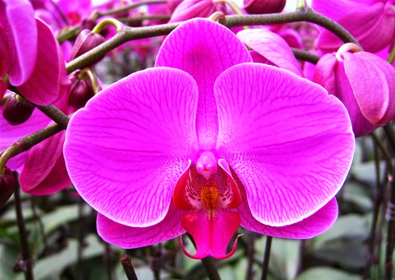 Flower hd wallpapers free download flowers high definition wallpapers pink orchid flower wallpaper mightylinksfo
