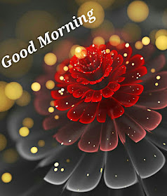 Shayari Hi Shayari Excellent Images DownloadDard Ishq