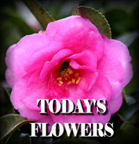 FlowersfromToday Thurs Eve