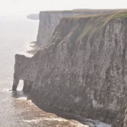 RSPB Bempton Cliffs Yorkshire
