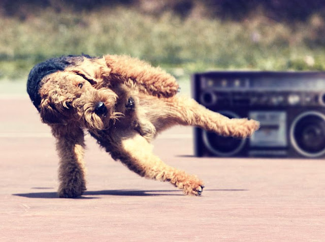 funny animal pictures, break dancing dog