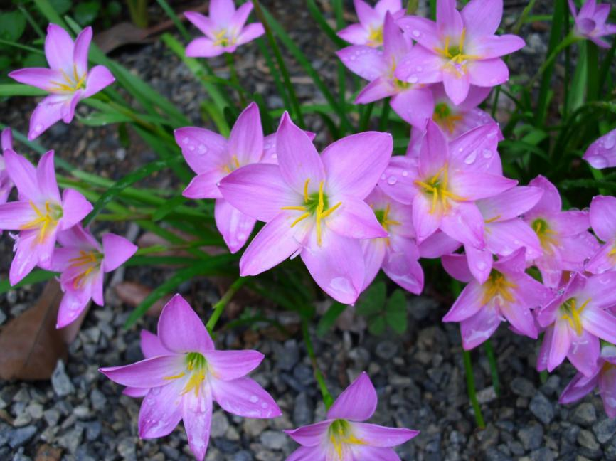 Super flores OP63