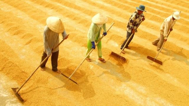 Những người nông dân lam lũ