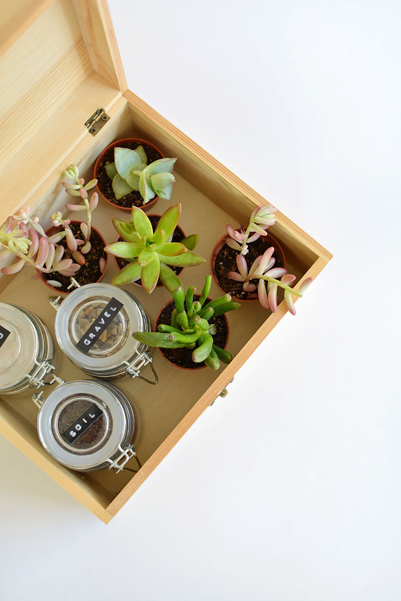 Succulent Gift Box Step by Step