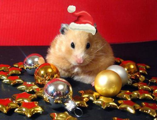 Cute christmas animals - photo#6