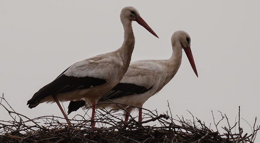 The Storks of Böbs