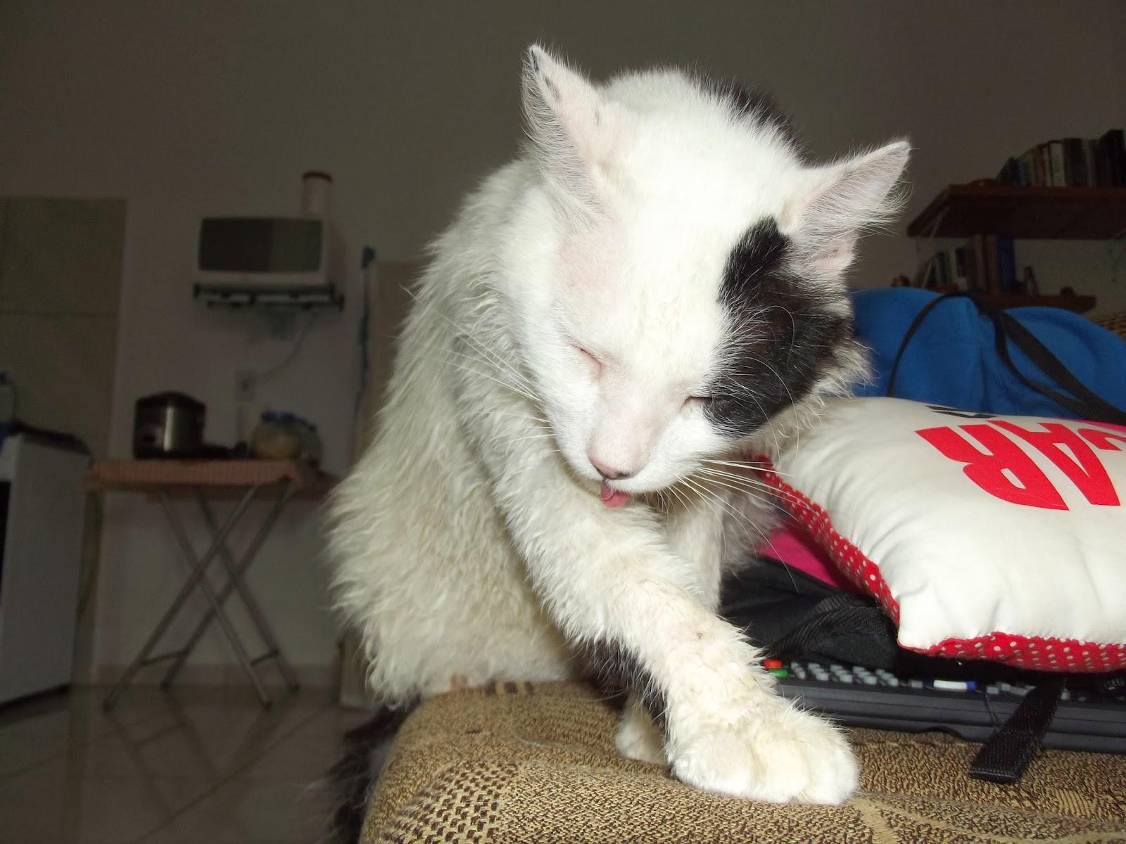 banho desse gatinho foi só preventivo mas dá pra ver como o  #B11A2C 1600 1200