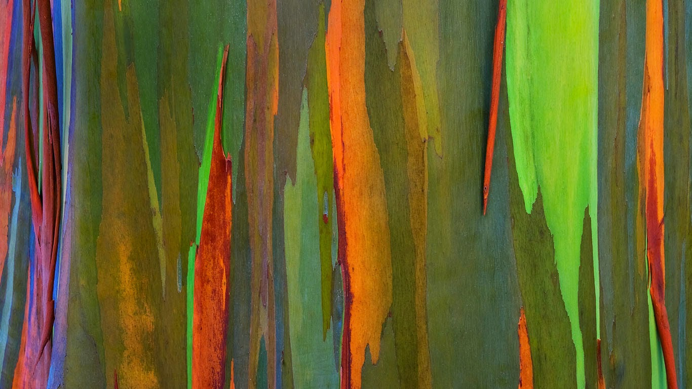 Bark of a rainbow eucalyptus tree, Maui, Hawaii (© Daryl Pederson/plainpicture) 155