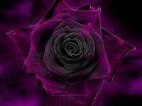 Flores, Amigos, Amizades, Regadas, Mensagem de Amizade
