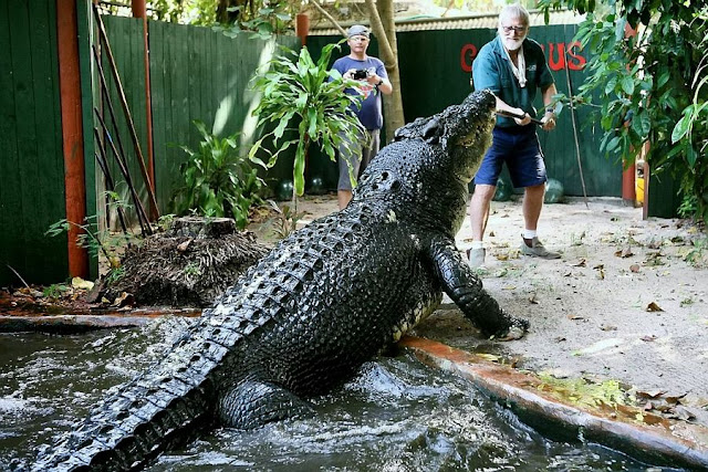 Cassius Clay - World's Largest Crocodile